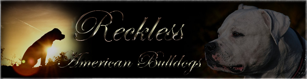 Reckless Banner
