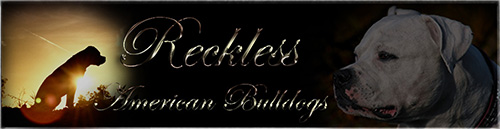 Reckless Banner board